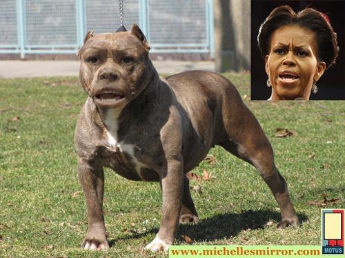mo pitbull copy[4].jpg